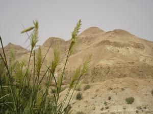 Israel Landscape