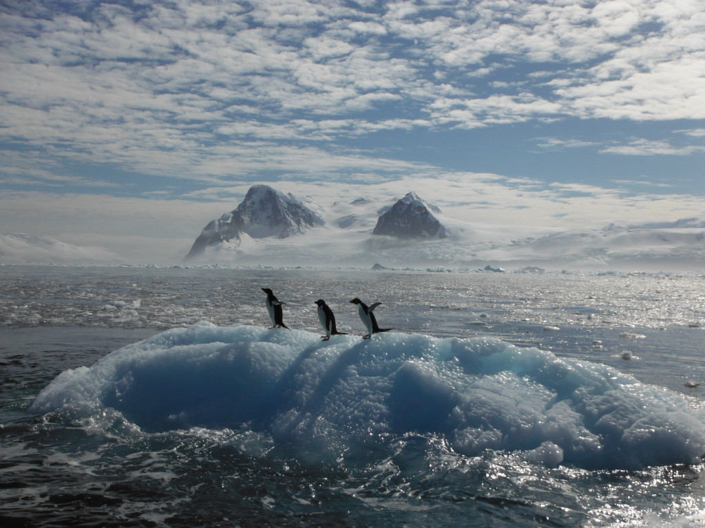 kosher Penguins Antarctica